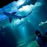 Aquarium-Paris